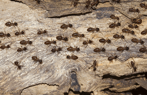 Things You Should Do Before Treatment For Termite Damage